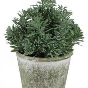 Potted Herb Bush