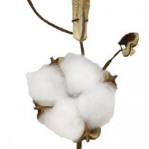 Cotton Pick Natural