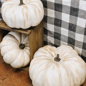 Giant White Pumpkin