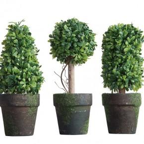 Mini Boxwood Topiary Set of 3