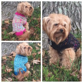 C.C - Mixed yarn knitted pet sweater