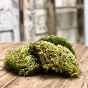 Bagged Moss