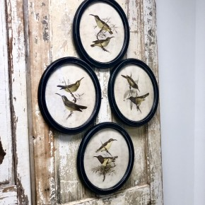 Assorted Olive Bird Frame