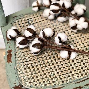 Preserved Cotton Stems, Set of 3