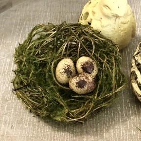 Moss Birds Nest