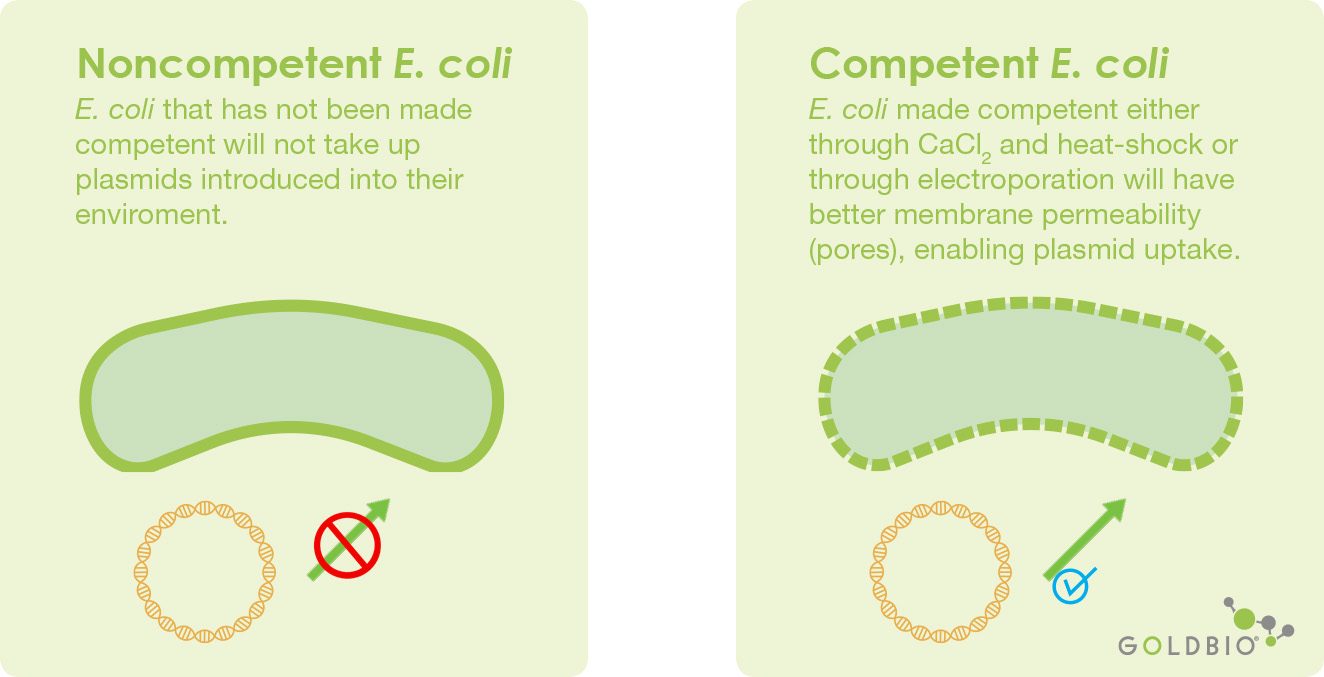 competent cell and noncompetent cells