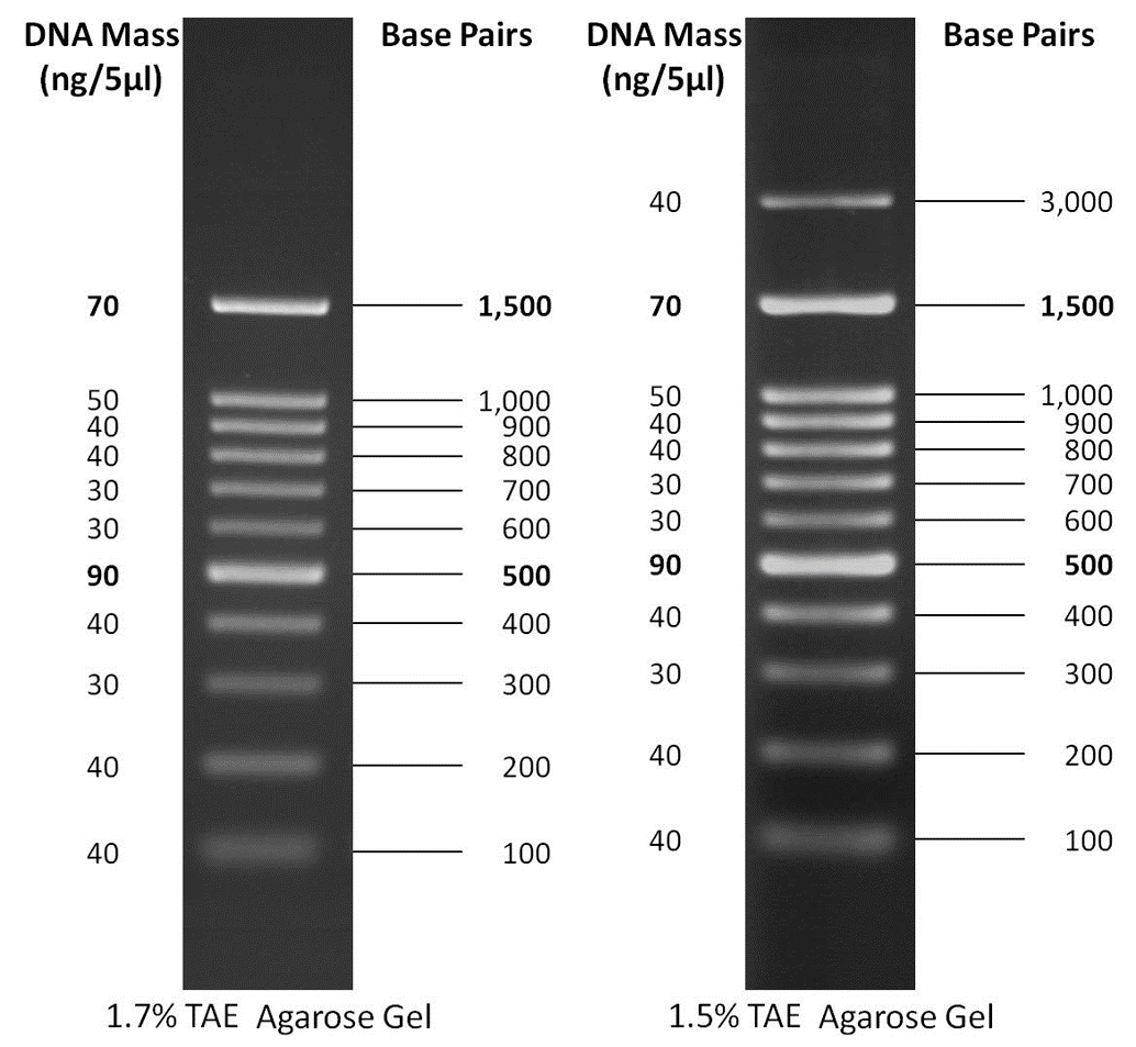 Comparison between GoldBio 100 bp & 100 bp PLUS DNA Ladders