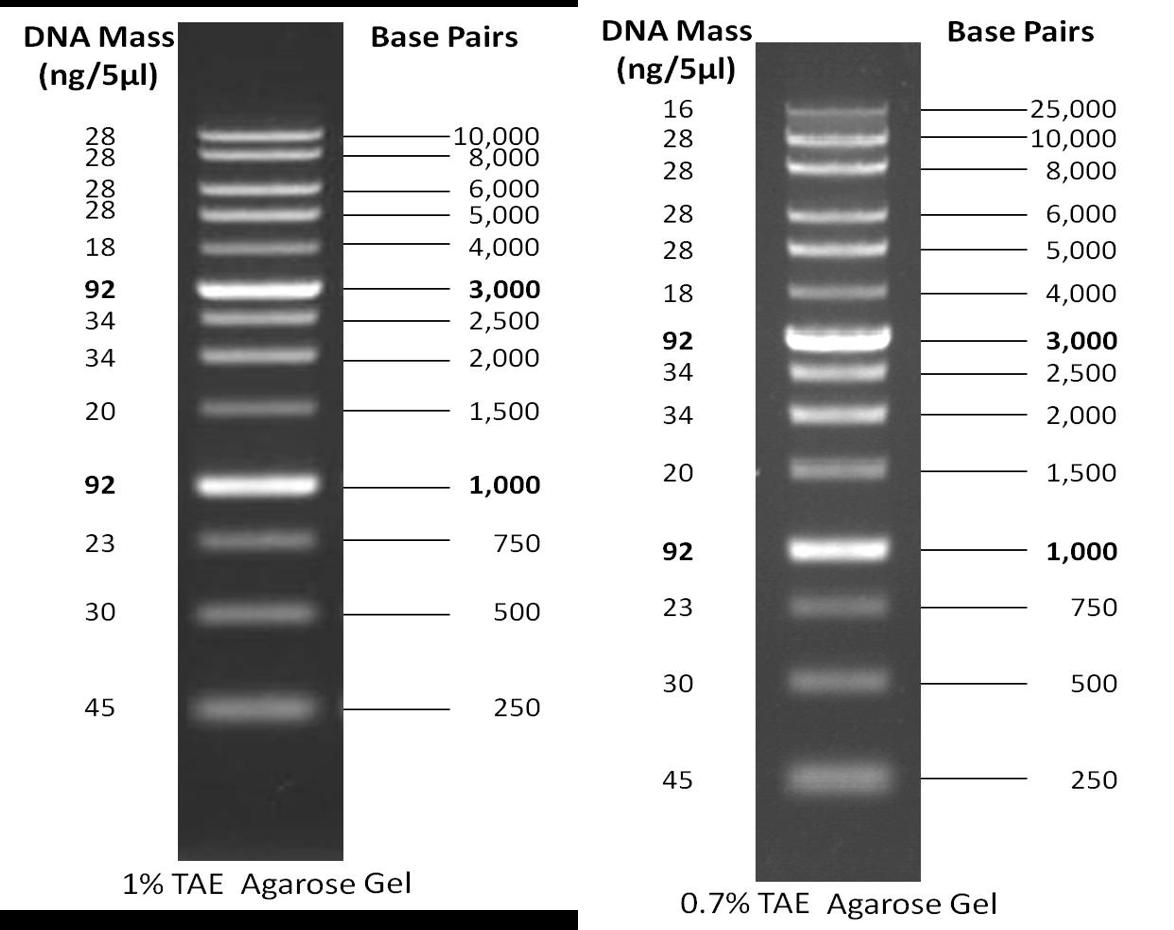1 kb DNA Ladder   GoldBio