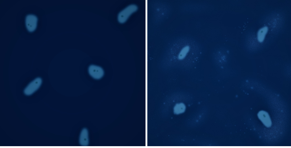 Staining of DNA in mycoplasma contaminated cell cultures using DAPI or Hoechst stain. DNA staining is a common method used to detect mycoplasma. On the left, DAPI staining shows uncontaminated cells. On the right, DAPI staining is seen in the cell and surrounding the cells indicating contamination. While simple, DNA staining is not conclusive and does not indicate the type of contamination.
