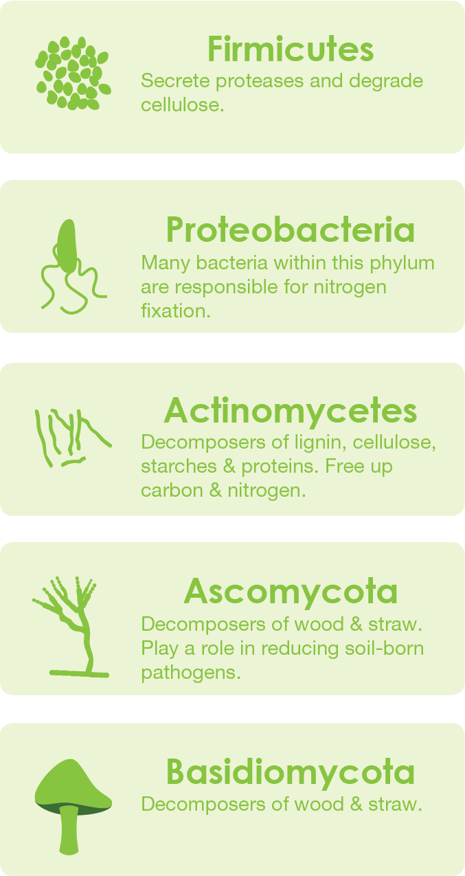 Microorganisms of compost - compost microbiome and their role