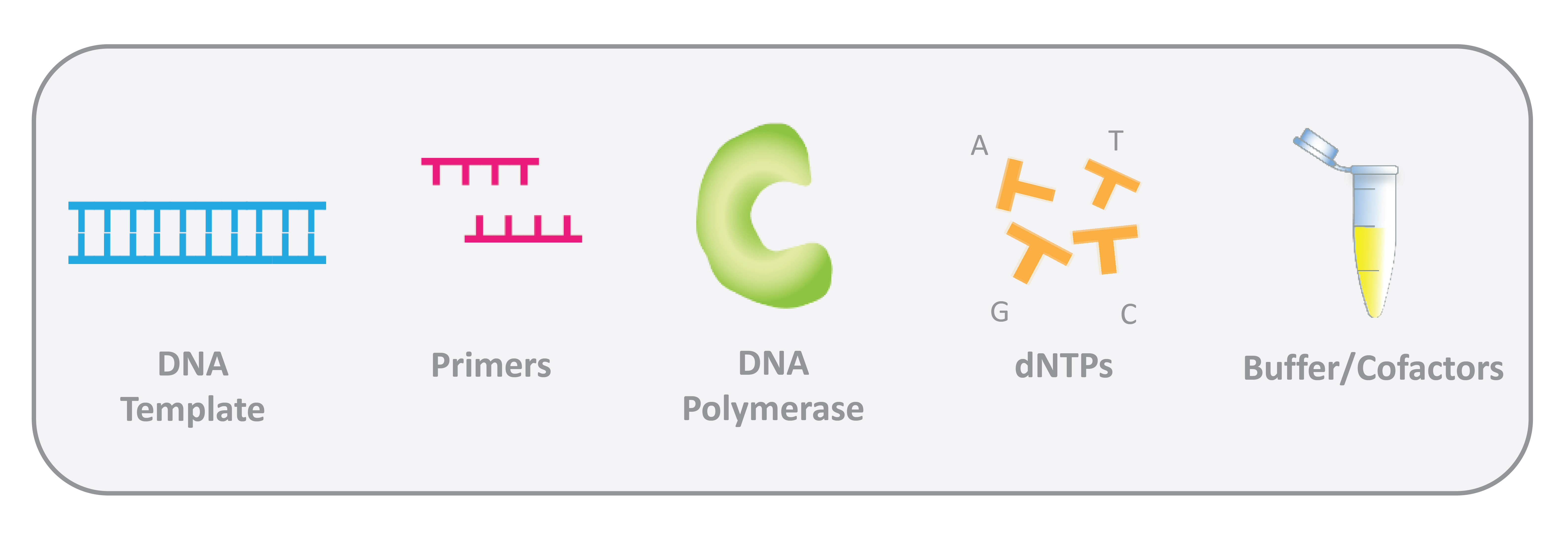 molecular components of PCR (polymerase chain reaction) includes primers, DNA template, Taq DNA polymerase, dNTPs, buffer, magnesium chloride and cofactors