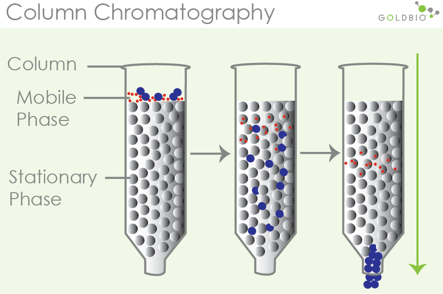 two phases of column chromatography illustration: mobile phase and stationary phase. Column chromatography, stationary phase, mobile phase
