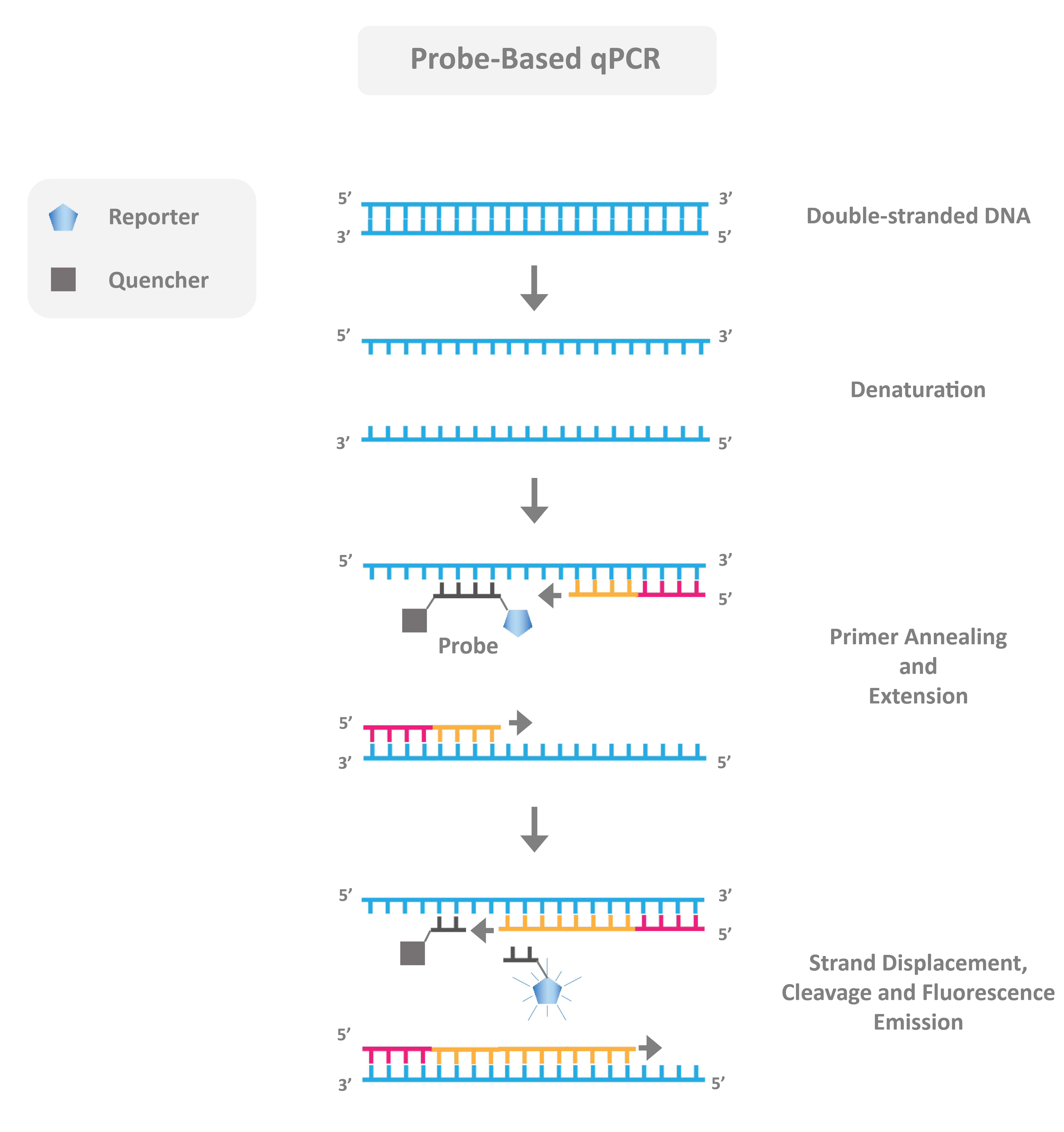 Probe based qpcr, what is the difference between a pcr probe and dye? why use probes for qpcr?