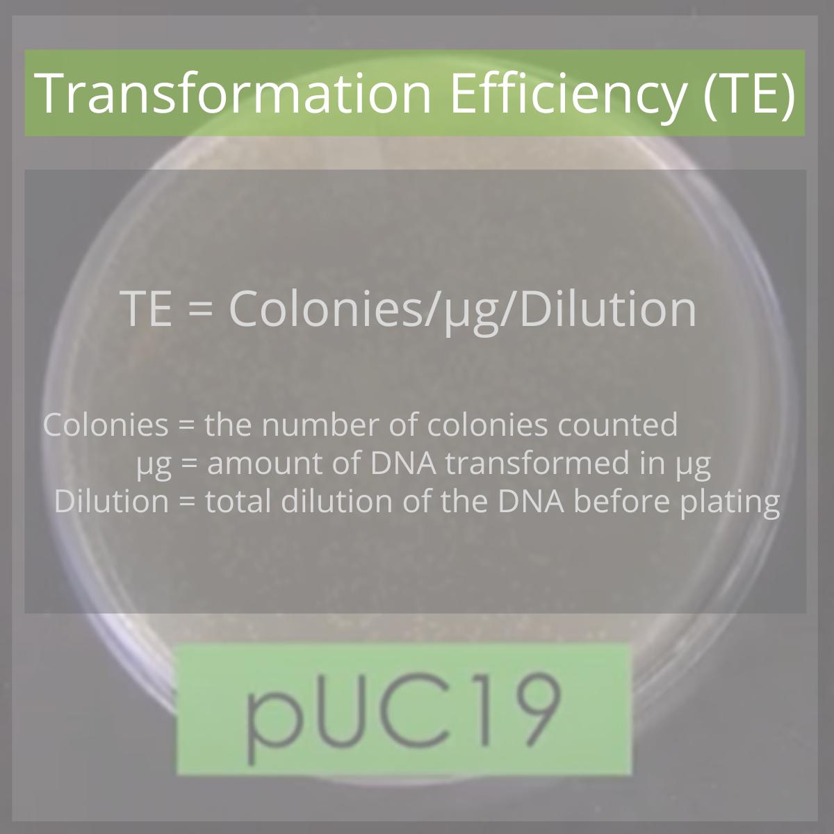 Formula for transformation efficiency