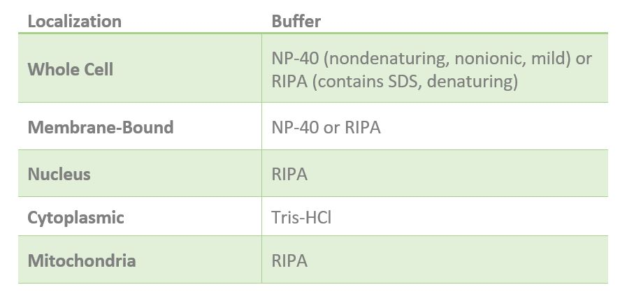 western blot lysis buffer list, recommended lysis buffers for western blot, what are the best lysis buffers for western blot