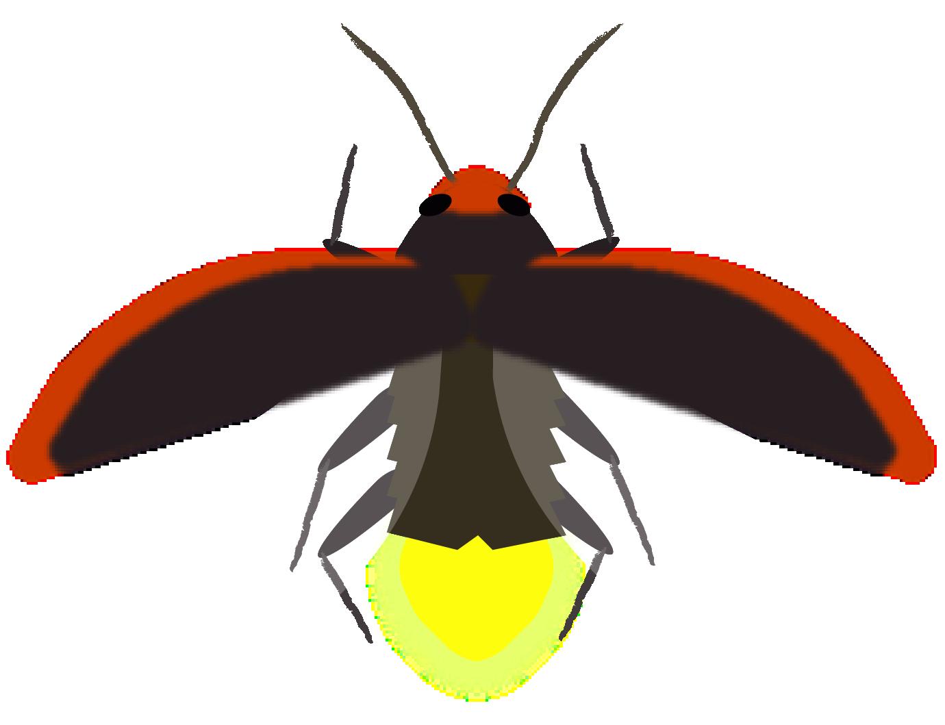 Firefly - d-luciferin dependent luciferase