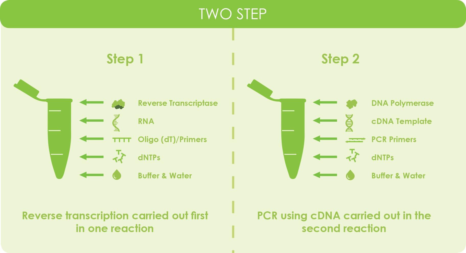 Reverse Transcriptase  U0026 Cdna Overview  U0026 Applications