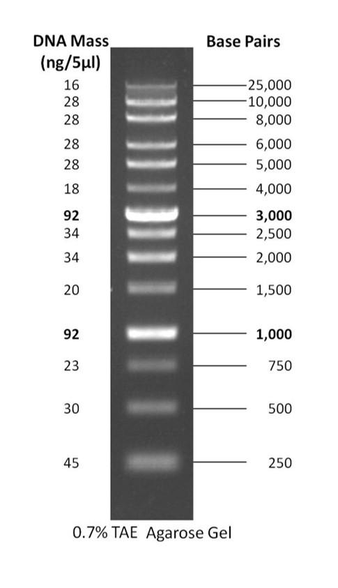 1 kb PLUS DNA Ladder