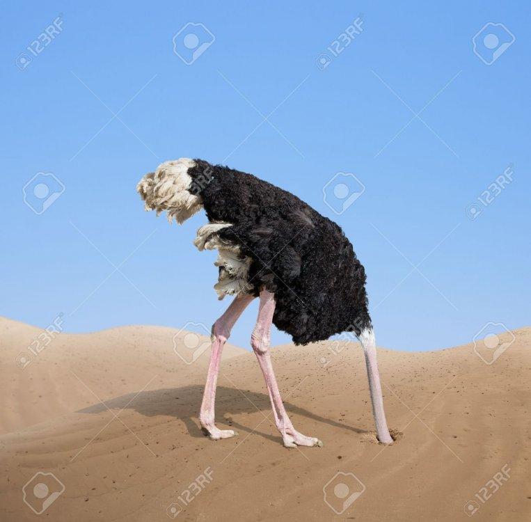 31721808-scared-ostrich-burying-its-head-in-sand.jpg