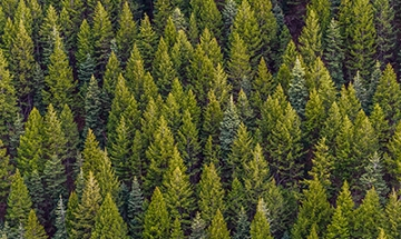 1 Trillion Trees