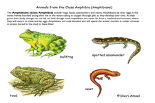 Amphibian Classification | CK-12 Foundation