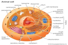 bbc best animals and plant cells