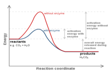 Energy and Biochemical Reactions