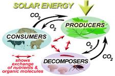 Flow of Energy in Ecosystems