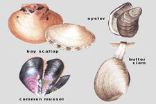 assessment of mollusk species in Key words: mollusca, scheldt estuary, species diversity, salinity gradient, pseudotrichia rubiginosa abstract the mollusc fauna of 64 sites in 31 tidal marshes was surveyed along a salinity gradient from freshwater to marine conditions in the river reliable assessment can be made of the importance of the scheldt estuary.