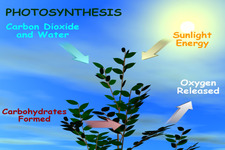 Connecting Cellular Respiration and Photosynthesis ( Read ) | Life ...