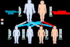 Sex-linked Inheritance
