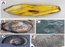Types of Fossilization
