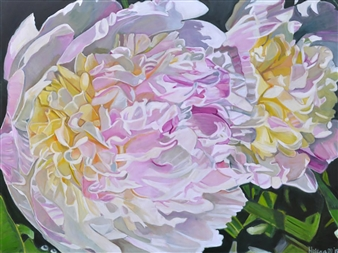 Helena McConochie - Waterdrops on Peonies 'Phillipa' Oil on Canvas, Paintings