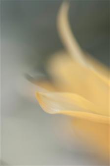 Kathleen Messmer - Yellow Haze Photograph on Infused Aluminum, Photography