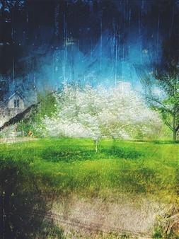 Evan William Plunkett - Pasture #33 Archival Pigment Print, Photography