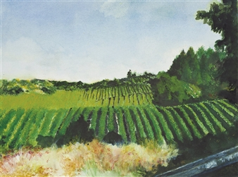 Nancy Holleran - Calistoga Vineyard Watercolor on Paper, Paintings