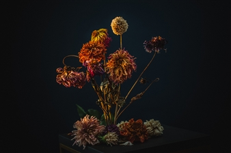 Heather Bragman - Dahlias Photograph on Hahnemühle Paper, Photography