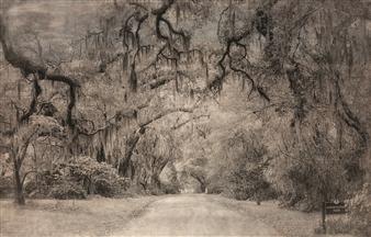 Linda Harding - Horticultural Maze Photograph on Fine Art Paper, Digital Art