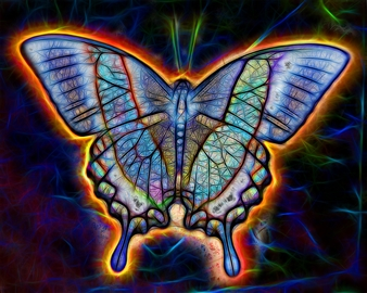 Howard Harris - Butterfly 10x8 Digital Sublimation Print on Aluminum, Photography