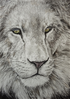 Natalia Chaplin - Lion Chalk and Graphite on Paper, Drawings