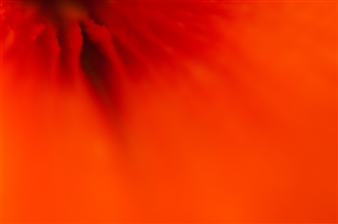 Kathleen Messmer - Firefall Photograph on Infused Aluminum, Photography
