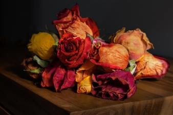 Rogelio Cabadas Lopez - Flores Seca Acrylic on Photograph, Photography