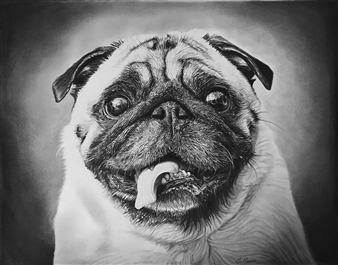 Samantha Messias - Pugs and Kisses Pencil & Charcoal, Drawings