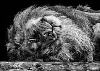 Melissa Helene - A Lion On Its Back Ink & Clay on Scratchboard, Drawings