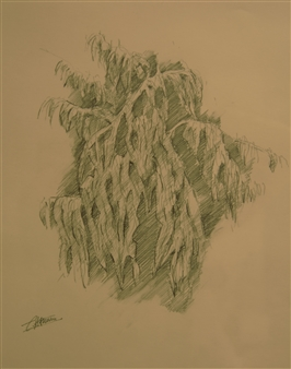 Caspar Baum - Sketch for Tropical 2 Polychrome Pencil, Drawings