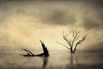 Linda Harding - Petrified Trees Photograph on Fine Art Paper, Photography