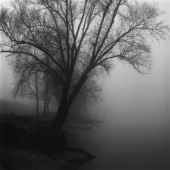 Gianluca Pollini - Tree Along the Po Photograph on Fine Art Paper, Photography