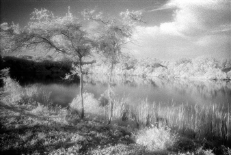 Carolyn Rogers - Florida Vaca Platinum/Palladium Photograph, Photography