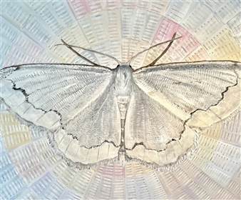 John Britton - Lace Moth Oil on Canvas, Paintings
