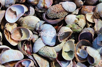 Wolf Spicer - Shells Archival Pigment Print, Photography